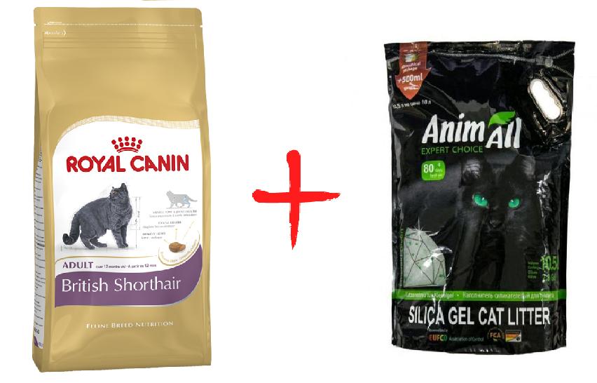 "Акция ""Вместе дешевле"" Royal Canin British Shorthair Adult 10 кг + ANIMALL ""Зеленый изумруд"" 10,5л"