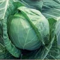 Семена капусты б/к Аммон F1 2500 семян Seminis