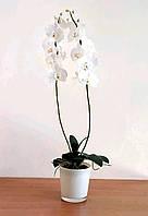Орхидея Фаленопсис. Орхидея фаленопсис из фоамирана. , фото 1