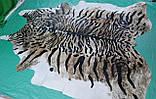 Красивейшая коровья шкура крашенная под бенгальского тигра, фото 3