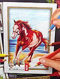 Картины-раскраски карандашами 'Лошадка' (PBN-01-03), фото 2