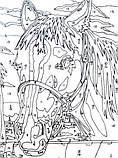 Картины-раскраски карандашами 'Лошадка' (PBN-01-03), фото 10