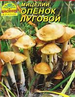 Мицелий гриба  Опенок Луговой, 10 г