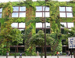 Зеленая стена или вертикальный сад