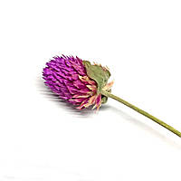 Сухоцвет Escudo натуральный лиловый
