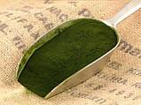 Хлорелла в порошке (диетическая добавка суперфуд ) Veganprod 250г, фото 3