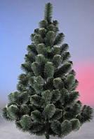 """Сосна """"Новогодняя"""" (белые кончики) (высота 1,5 м)"""