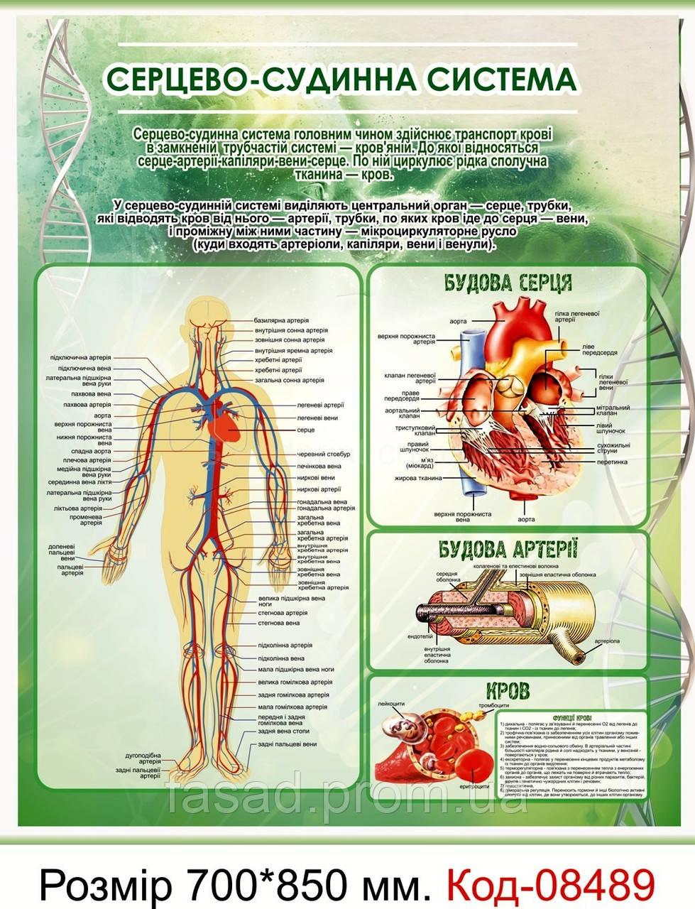 "Стенд пластиковий ""Серцево-судинна система"" Код-08489"