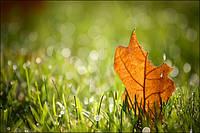 Какие удобрения вносить осенью для газона и декоративных растений? Виды и дозировка