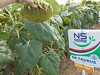 Семена подсолнечника НС Таурус (под Евро-Лайтнинг)