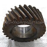 Шестерня колінчастого Д-65 ЮМЗ Д03-005 (каленная), фото 3