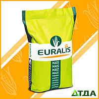 Семена кукурузы ЕС Сенсор ФАО 370 , фото 1