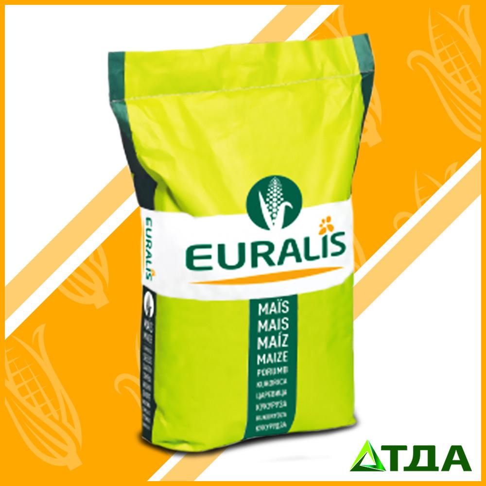 Семена гибрида кукурузы ЕВ Геллери укр ФАО 340