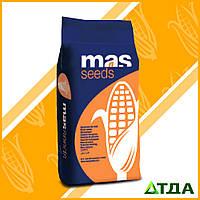 Семена кукурузы Mas 33.A/Мас 33.А ФАО 320