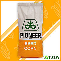 Семена кукурузы П8745/ P8745 имп (ФАО 280)