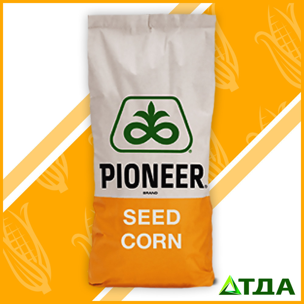 Семена кукурузы гибрид ПР38A24 / PR37A24 (ФАО 390)