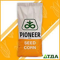 Семена кукурузы гибрид П0216 / P0216 имп. (ФАО 480) AQUAmaх