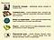 Настольная игра Crowd Games Крестный Отец. Империя Корлеоне (4627119440211), фото 9