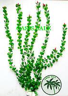 Растение 55см №5