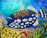 """Заготовка для вишивки бісером картина """"Морський розбійник"""" 32х26 см"""