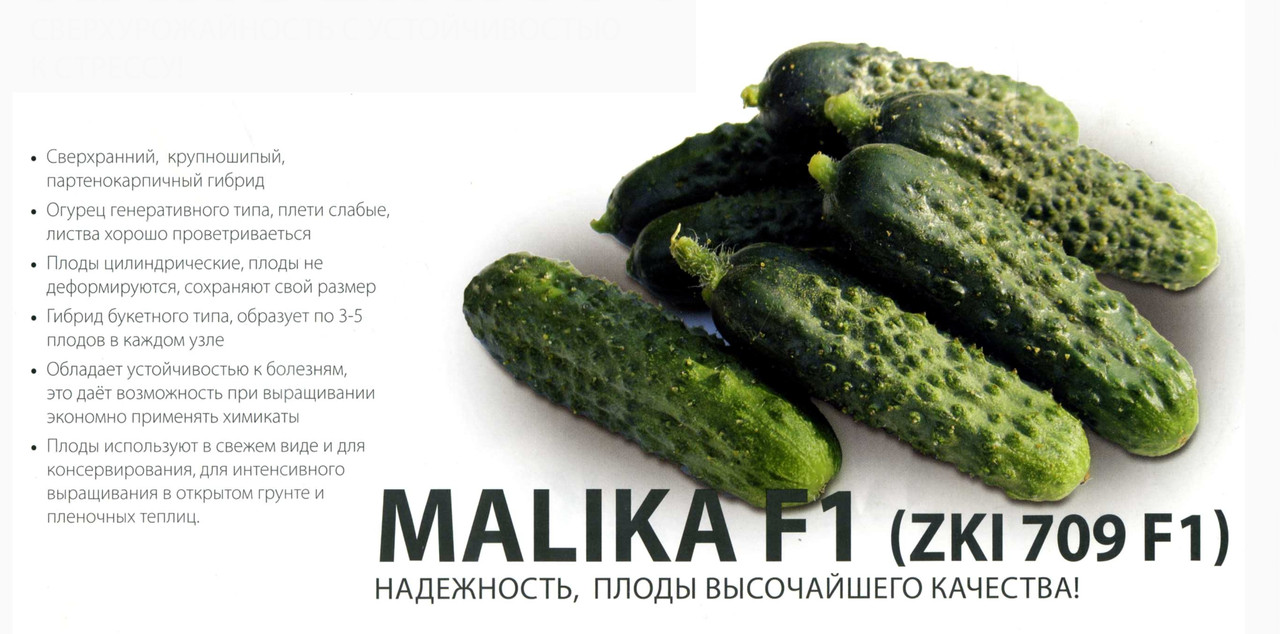 Огурец Малика F1 1000 сем. ZKI (Венгрия)