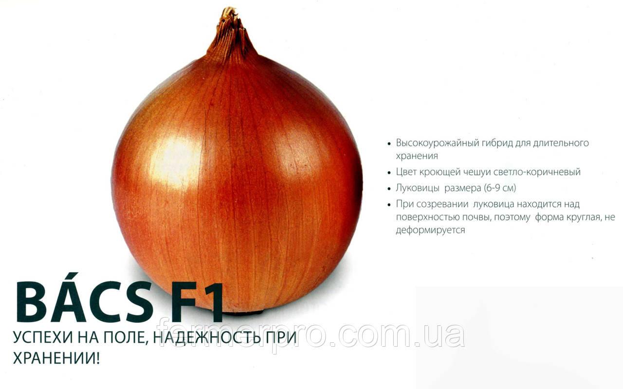 Семена Лука Басс F1 (Bacs F1) 1кг  ZKI (Венгрия)