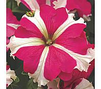 Семена Петуния крупноцветковая Тритуния F1 Розовая Звезда Rose Star 1000 семян Syngenta, фото 1