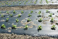 Агроволокно GrowTex 42 г/м2 размер 3,2х100 черное