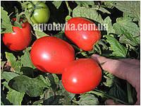 Семена томата детерминантного для переработки Рани F1 (1000семян) Libra Seeds (Erste Zaden)
