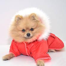 Курточка для собак Осень красная, фото 2