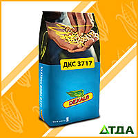 Семена кукурузы DKC 3717 / ДКС 3717 ФАО 280