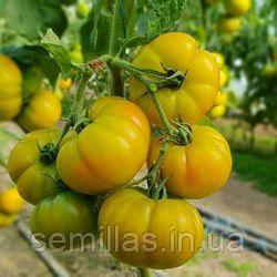 Семена томата Елоу Кой F1 (Yellow Koy F1) 100 сем., желтого индетерминантного