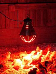 Инфракрасные лампы для обогрева животных