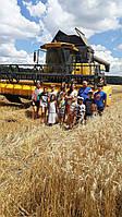 Услуги по уборке урожая, зерновых, кукурузы