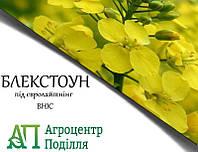 Рапс озимый БЛЕКСТОУН ІМІ под евролайтинг 300-305 дн. (бесплатная доставка)