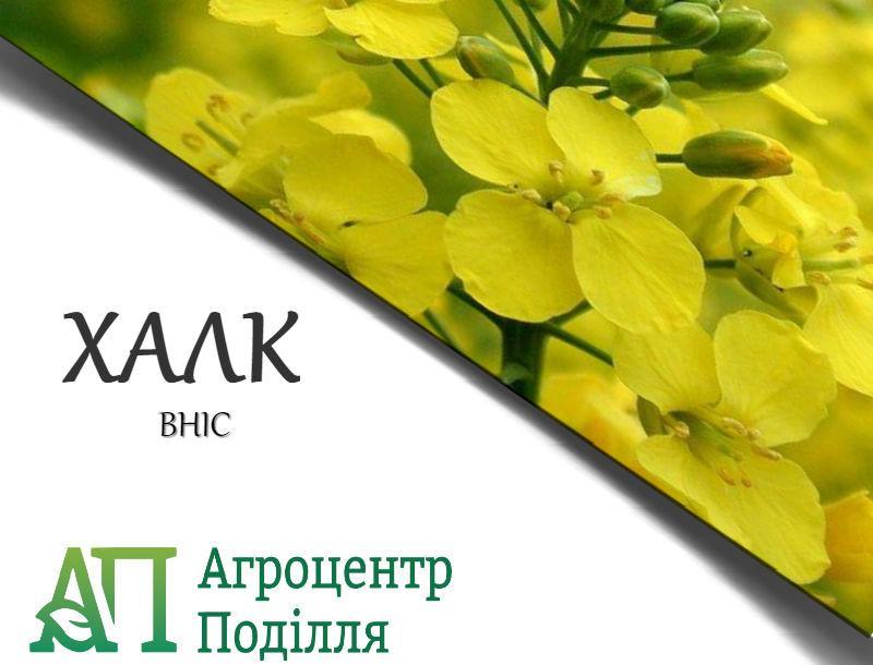 Рапс озимый ХАЛК 295-300 дн. бесплатная доставка урожай 2020 г.