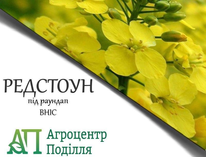 Рапс озимый РЕДСТОУН РС толерантный к глифосату 300 дн.