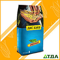 Семена кукурузы DKC 3203 / ДКС 3203 ФАО 240, фото 1