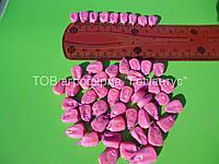 Семена кукурузы Днепровский 257 СВ. Семена кукурузы от производителя!