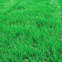Семена трава овсяница вівсяниця фасовка 20 кг