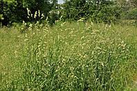 Насіння трава грястиця їжака збірна фасовка 20 кг