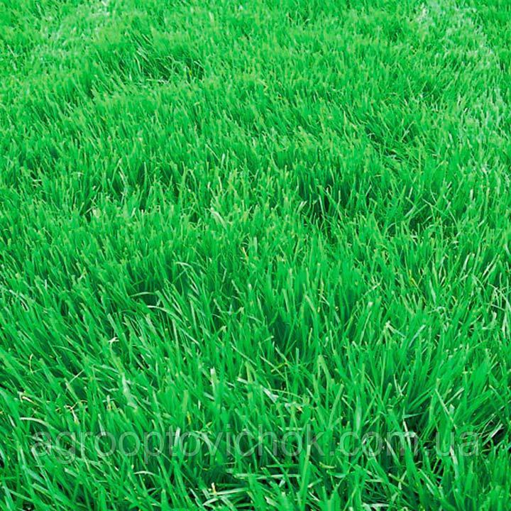 Насіння трава костриця вівсяниця фасовка 25 кг