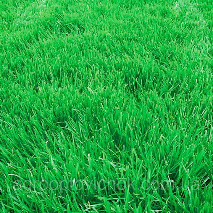 Семена трава овсяница вівсяниця фасовка 25 кг