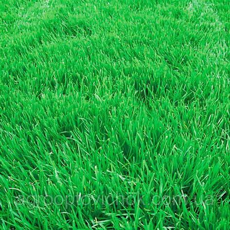 Семена трава овсяница вівсяниця фасовка 25 кг, фото 2