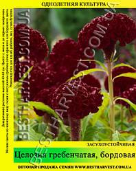 Семена цветов «Целозия гребенчатая» бордовая 50 г