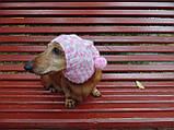Зимняя шапка для маленькой собаки,шапка для собаки, фото 4