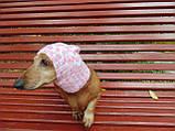 Зимняя шапка для маленькой собаки,шапка для собаки, фото 6