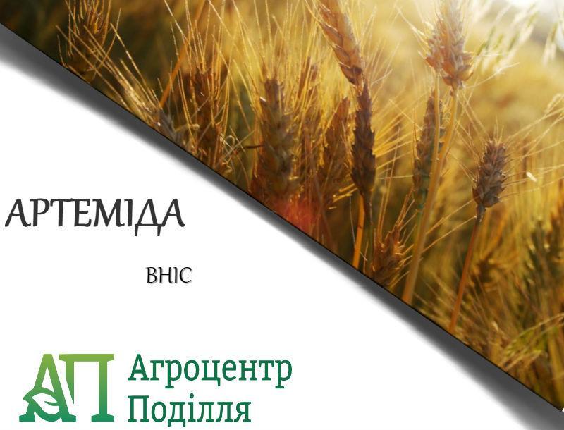Озимая пшеница АРТЕМИДА (суперелита)  ВНИС