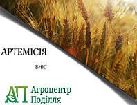 Озимая пшеница АРТЕМИСИЯ (суперелита) ВНИС самовывоз