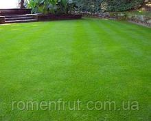 Трава газонная (партерная)
